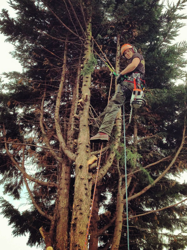 CJ Tree Surgeons in Bromsgrove