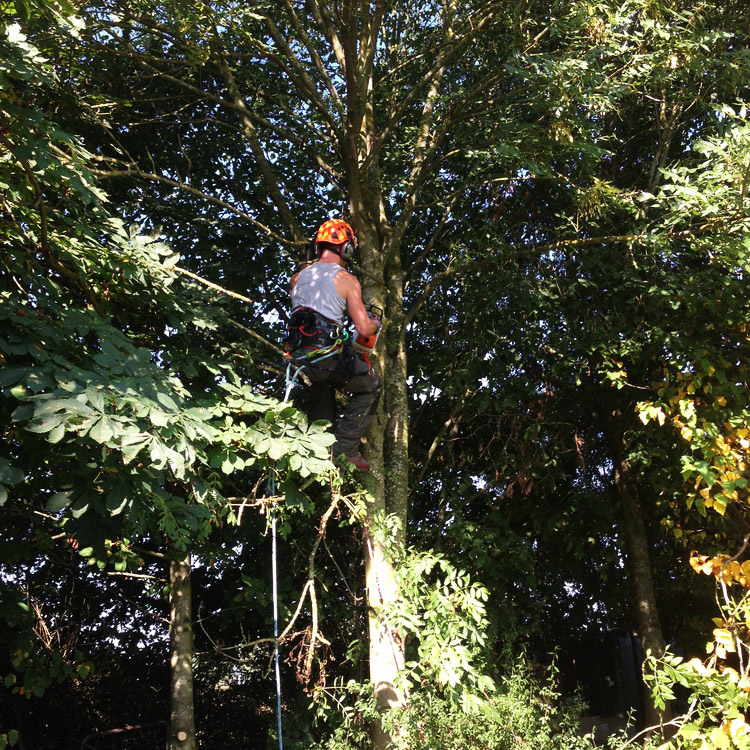 Tree Cutting Service Bromsgrove Trained Arborists